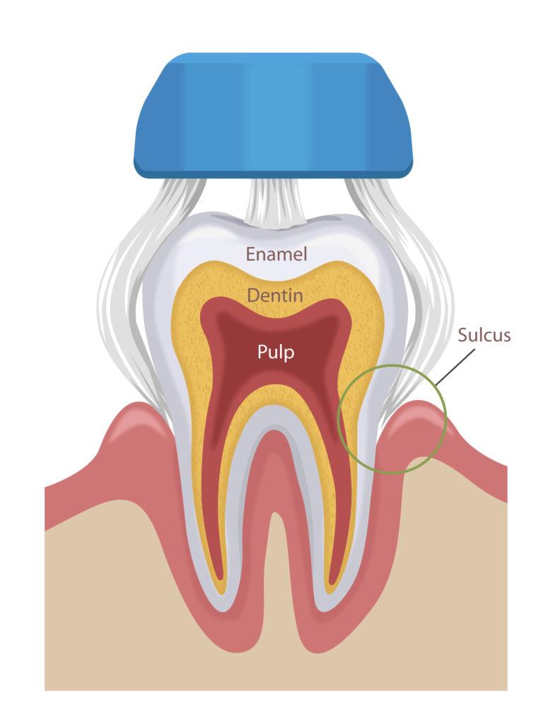 Collis Curve Toothbrush